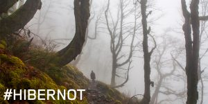 Hibernot_ForestWalk2